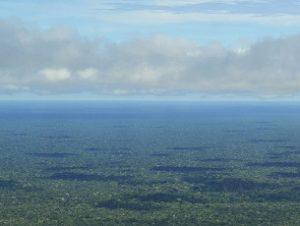 The Amazon Rainforest (CIAT International)