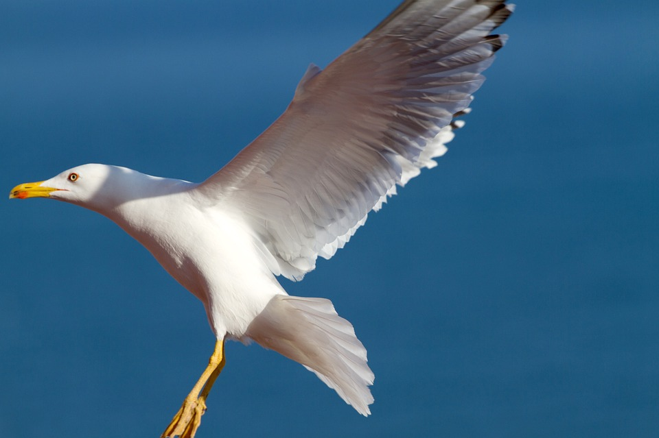 Image Result For Burung Laut