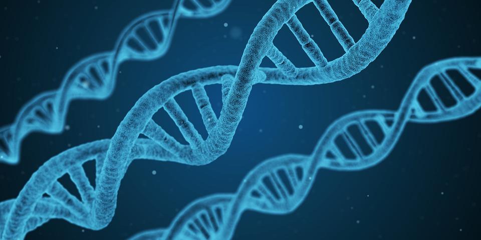 rapid DNA identification