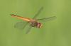 dragonfly missile defense